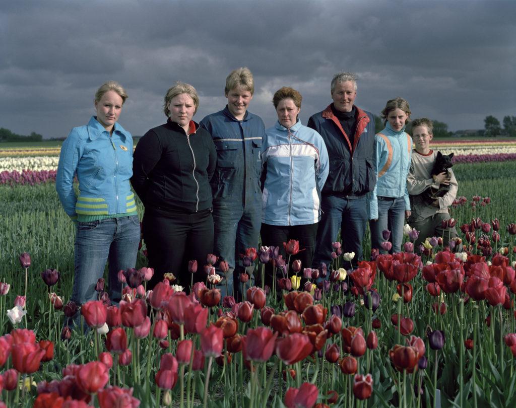 Tulpengoud Tulip Gold Tulpengold tulips tulpen Noord Holland Breezand