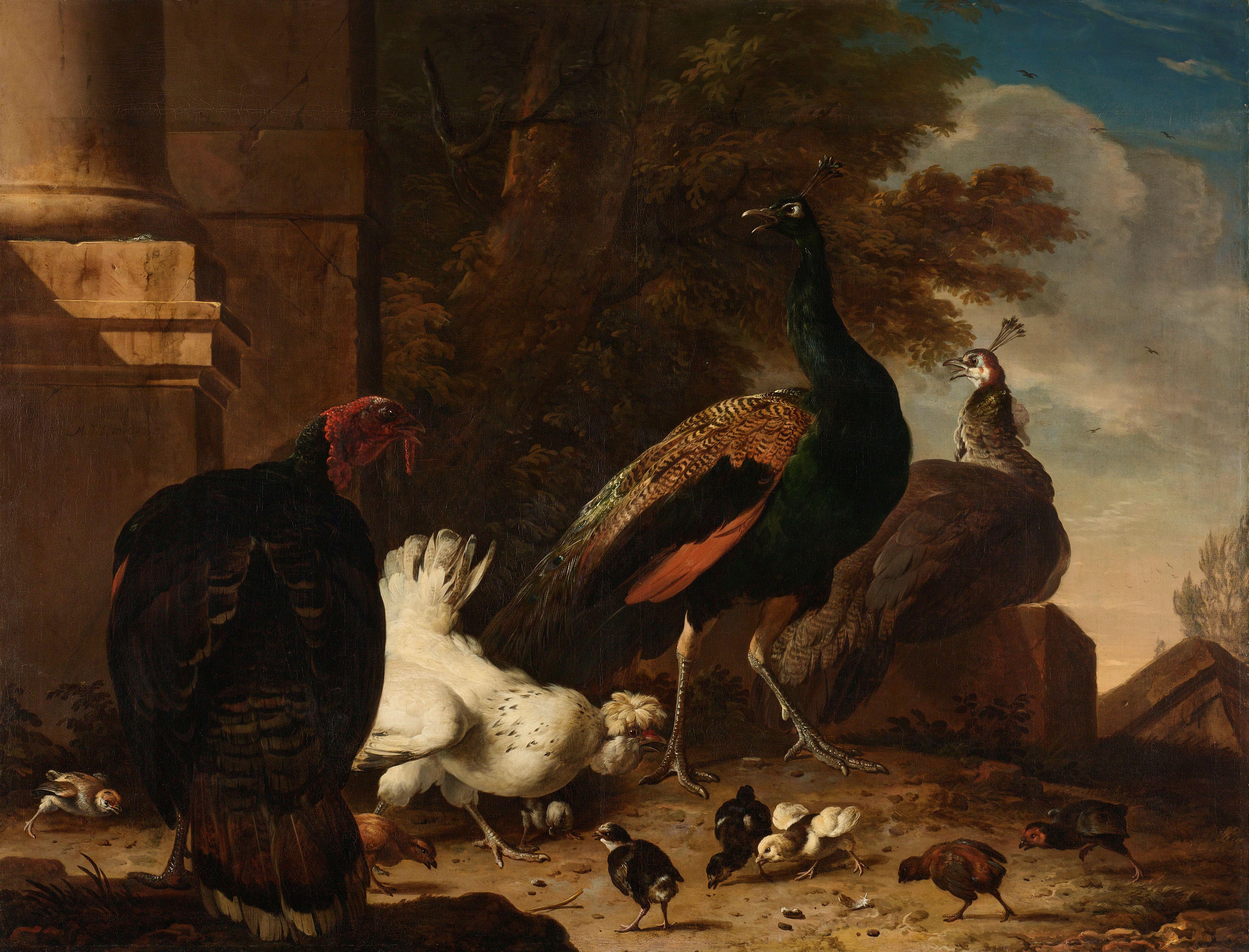 Een hen met pauwen en een kalkoen, Melchior de Hondecoeter, in bezit van het Rijks.
